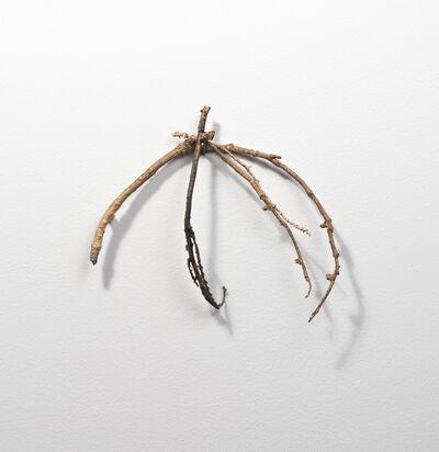 Carol Saft, 'Twigs 5', 2019