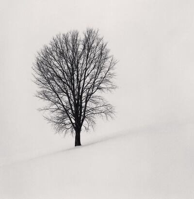 Michael Kenna, 'Philosopher's Tree, Study 1, Biei, Hokkaido, Japan', 2004