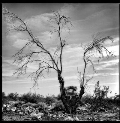 Vladimir Frumin, 'Tree 1', 2018