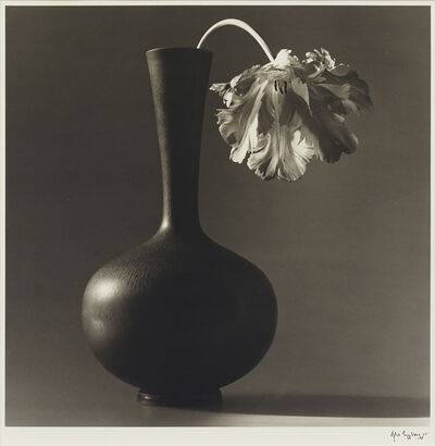 Robert Mapplethorpe, 'Parrot Tulip in Black Vase', 1985