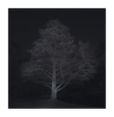 Ralf Peters, 'Winter #2', 2016