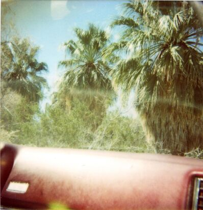Stefanie Schneider, 'Dashboard Palm Trees', 2005