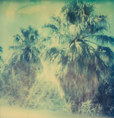 Stefanie Schneider, 'Blue Sky Palm Trees', 2005