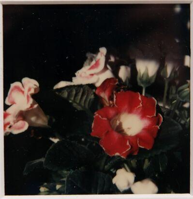 André Kertész, 'Polaroid, Garden', 1970