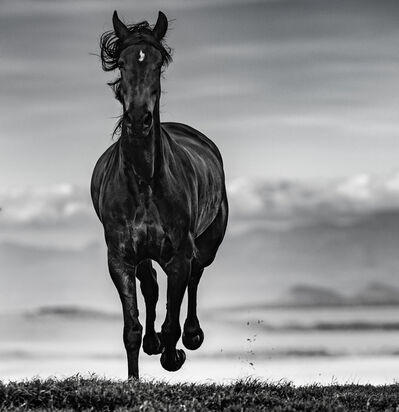 David Yarrow, 'Black Beauty', 2019