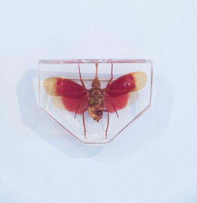 Yuko Katayama, 'Insect No. 1', 2018