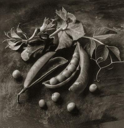 Cy DeCosse, 'Sweet Peas'