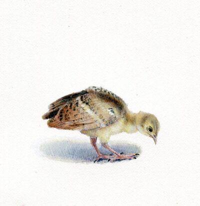 Dina Brodsky, 'Peacock Chick', 2018
