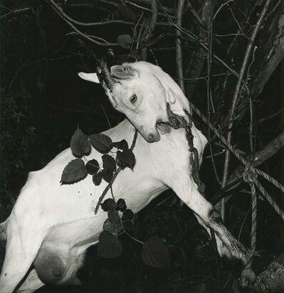 Issei Suda, 'Fushikaden - Yamagata, Ryokan Hot Spring', 1976