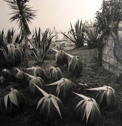 Joan Fontcuberta, 'Costa Llobero Garden, Barcelona', 1985