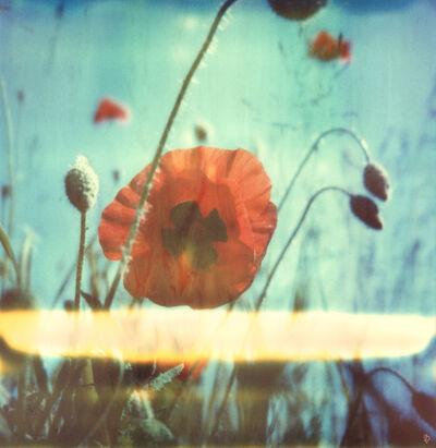 Carmen de Vos, 'New Poppy #01', 2015