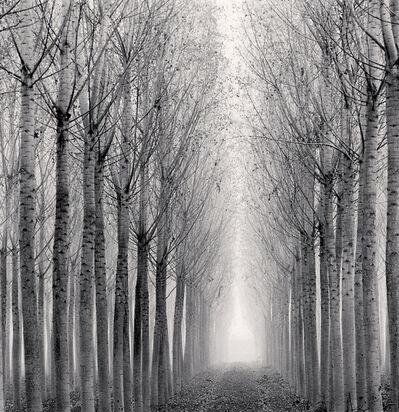 Michael Kenna, 'Tunnel of Poplars, Boretto, Reggio Emilia, Italy', 2017