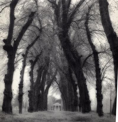 Lynn Geesaman, 'Parc de Canon, France (6-95-72-8)', 1995