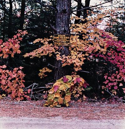 William Wegman, 'October 1981, Rangeley, Maine', 1981