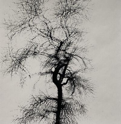 Harry Callahan, 'Multiple Exposure Tree', 1965