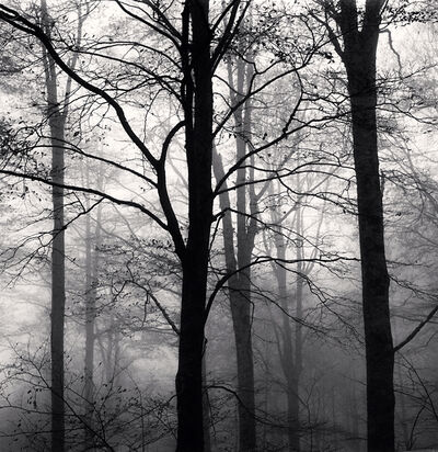 Michael Kenna, 'Forest Mist, Study 1, Rigopiano, Abruzzo, Italy', 2015