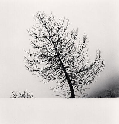 Michael Kenna, 'Mountain Tree, Pian della Regina, Crissolo, Cuneo, Italy', 2019