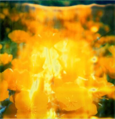 Stefanie Schneider, 'Yellow Flower', 2005