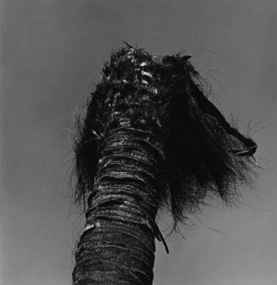 Issei Suda, 'Kohinata, Bunkyo-ku, 1981', 1981
