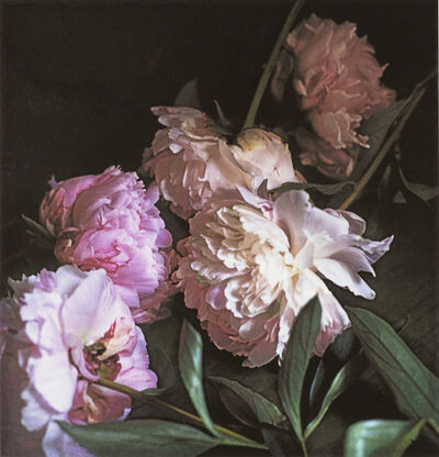 Craigie Horsfield, 'Five Peonies (1), Via Chiatamone, Naples, May 2010', 2015