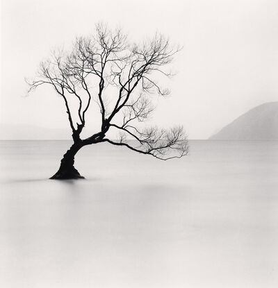 Michael Kenna, 'Wanaka Lake Tree, Study 1, Otago, New Zealand', 2013