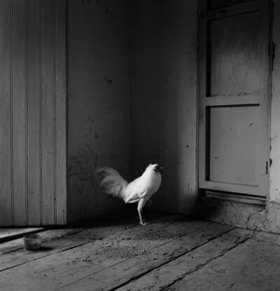 Flor Garduño, 'Este es mi gallo', 1981