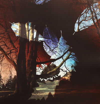 Dianne Bos, 'Fallen Leaves, Beaumont-Hamel Newfoundland Memorial, Somme, France', 2014