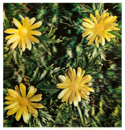 Andy Warhol, 'Rain and Flowers', 1970