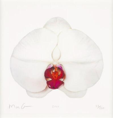 Marc Quinn, 'White Orchid', 2011