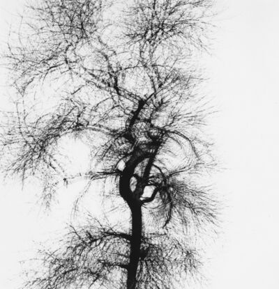 Harry Callahan, 'Multiple Exposure Tree, Chicago', 1956
