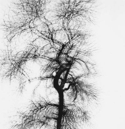 Harry Callahan, 'Multiple Exposure Tree, Chicago', 1956