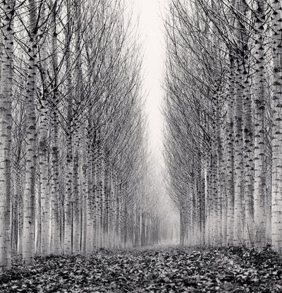 Michael Kenna, 'Corridor of Leaves, Guastalla, Emilia Romagna, Italy', 2006