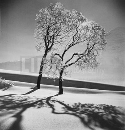 Alfred Eisenstaedt, 'Trees in Snow', 1947