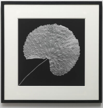 Robert Mapplethorpe, 'LEAF', 1989