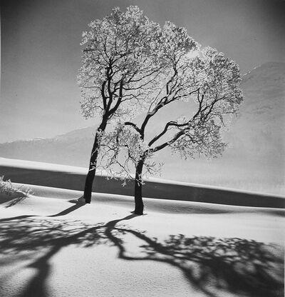 Alfred Eisenstaedt, 'Trees in snow, St. Moritz, 1947', 1947