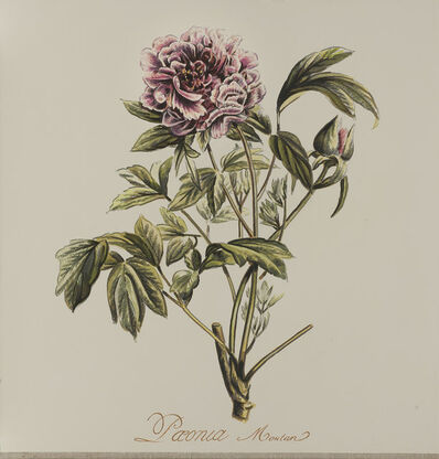 Jacques Payette, 'Paeonia Montan', 2018