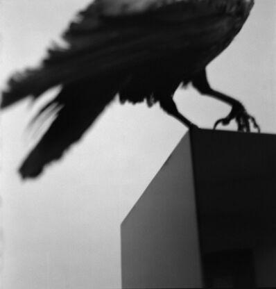 """Alberto García Alix, '""""Monologo con un cuervo"""" ', 2011"""