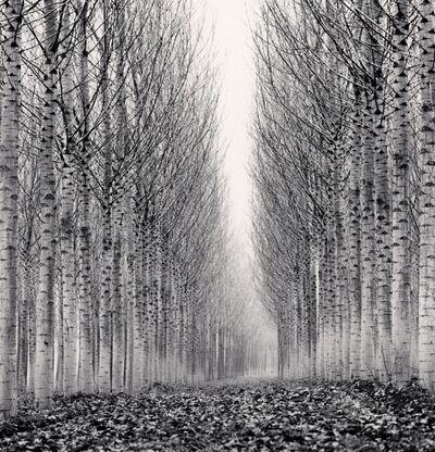 Michael Kenna, 'Corridor of Leaves', 2006