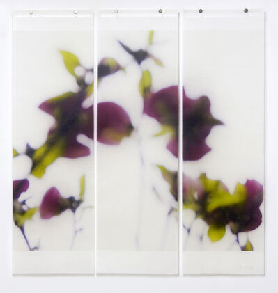 Jeri Eisenberg, 'Dark Magnolia', 2016