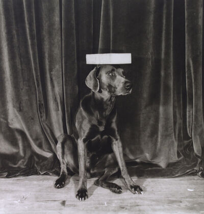 William Wegman, 'Modelling School', 1974