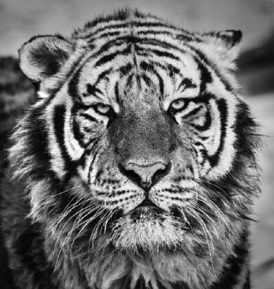 David Yarrow, 'Harbin', 2016