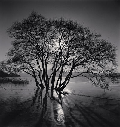 Michael Kenna, 'Yedang Reservoir Tree, Chungcheongnam-do, South Korea', 2018