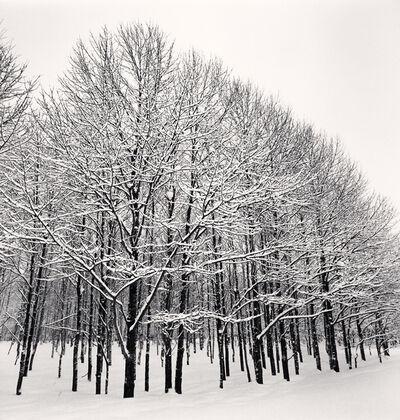 Michael Kenna, 'Forest Snow, Sakkuru-Otoineppu, Hokkaido, Japan', 2014
