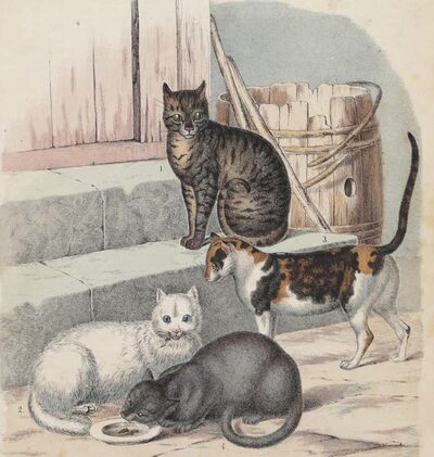 Unknown, 'Cats - Original Lithograph - 1860', 1860