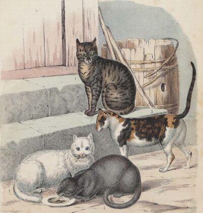 Unknown, 'Cats - Original Lithograph - 1860', 1860