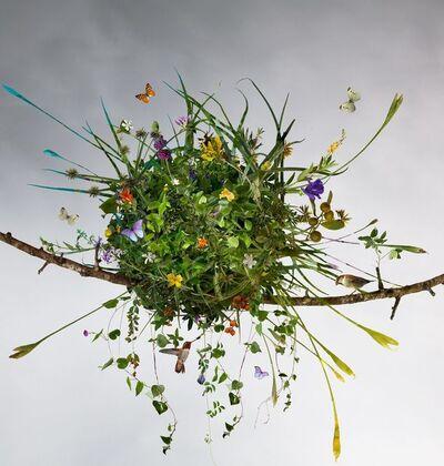 Ysabel Lemay, 'The Summer Nest ', 2010