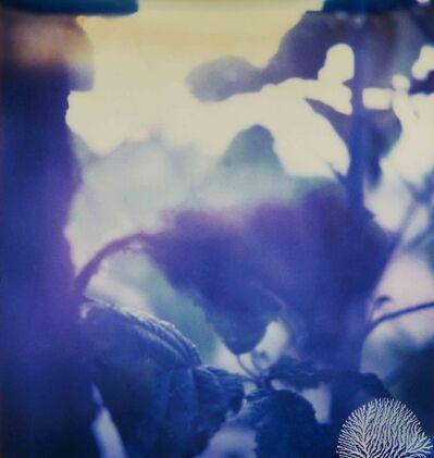 Fabrizio Ceccardi, 'Landscape', 2000