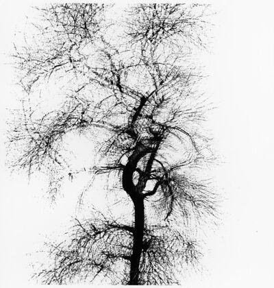 Harry Callahan, 'Multiple exposure tree', 1956