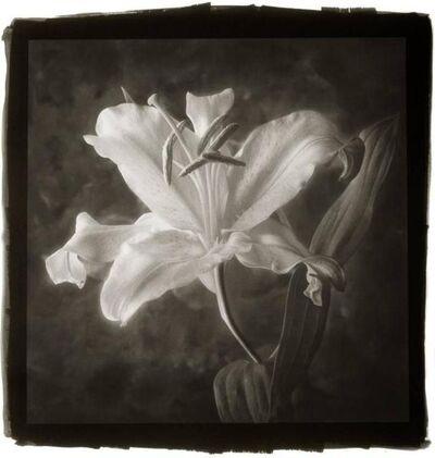 Cy DeCosse, 'Star Gazer Lily'