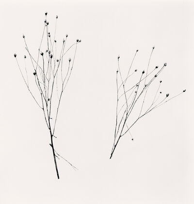 Michael Kenna, 'Two Winter Stalks, Biei, Hokkaido, Japan', 2013